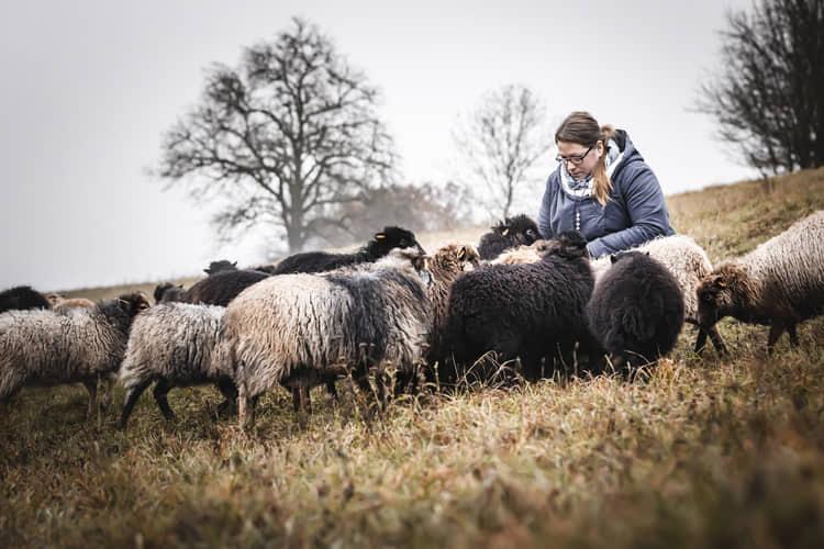 Sarah und Schafe